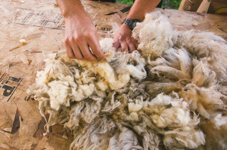 harrier_hill_sheep_wool-2