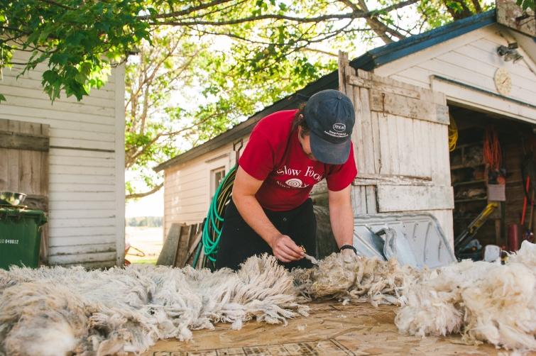 harrier_hill_sheep_wool-3