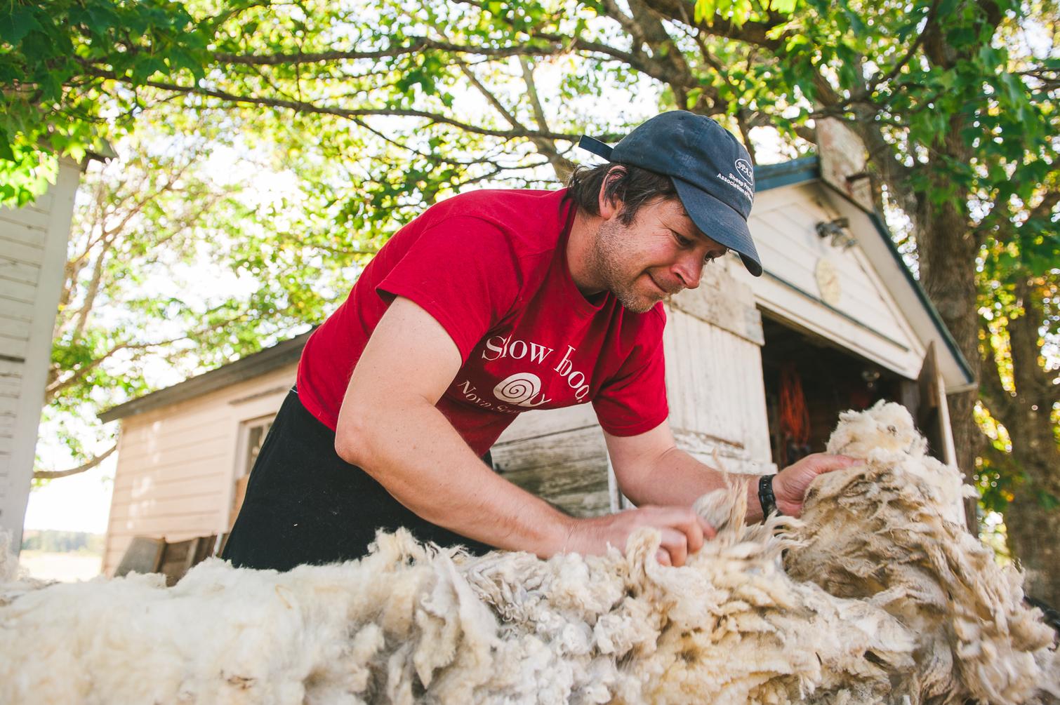 harrier_hill_sheep_wool-5