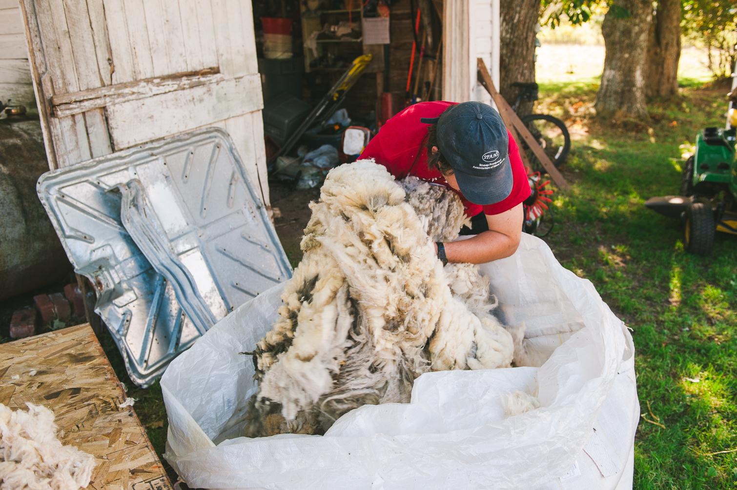 harrier_hill_sheep_wool-9