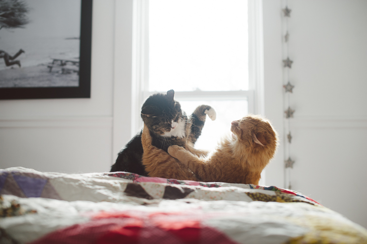 cat love/fight