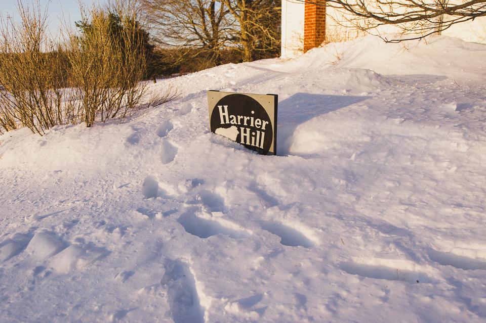 harrierhill.ca
