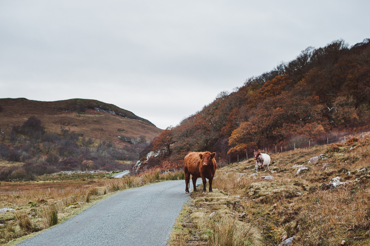 isle of skye, scotland ::: harrierhill.ca